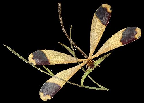 dragonfly-910379_edit